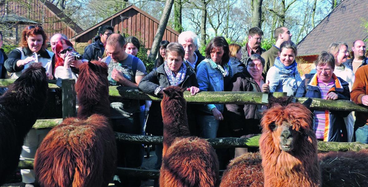 Alpakas hatnah: Bei individuellen gruppenführungen erfahren Besucher alles Wissenswerte über die Tiere im Zoo Duisburg.